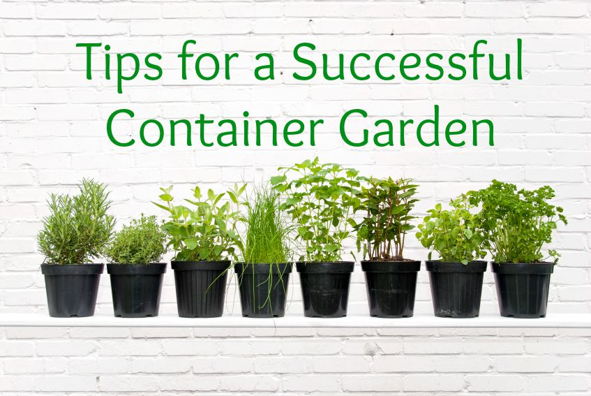 Container Gardens Offer Scalable Gardening for Beginners